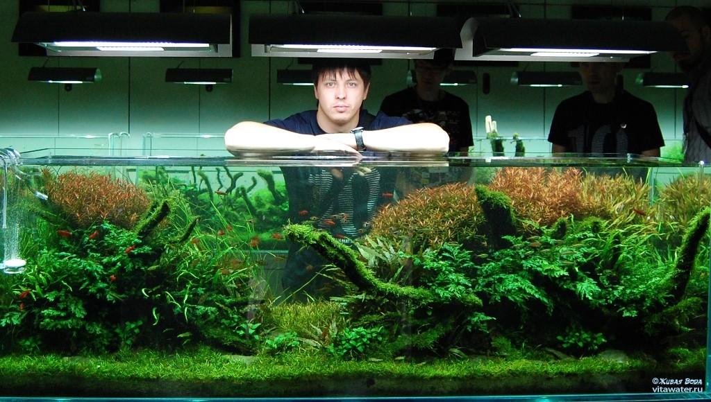 Аквариум  Амано Такаши — удивительный подводный мир