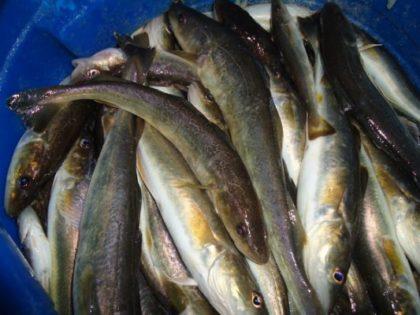 мешок для ловли рыбы 4