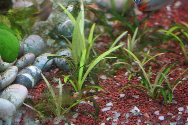 Калий в аквариуме