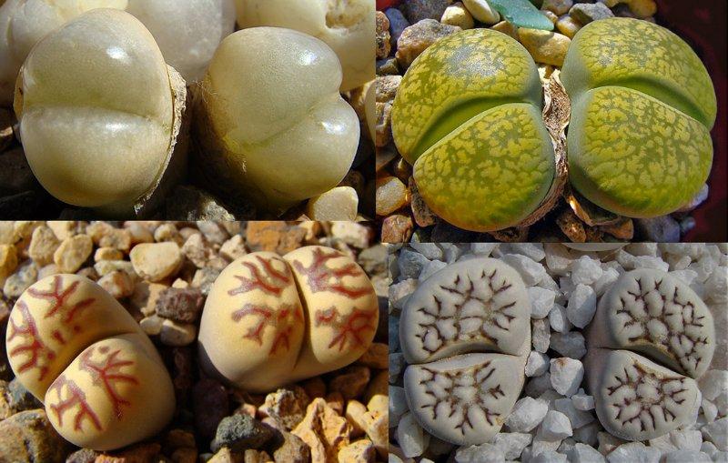 Сколько живых камней нужно в рифовый аквариум?