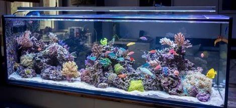 Кальквассер для морского аквариума