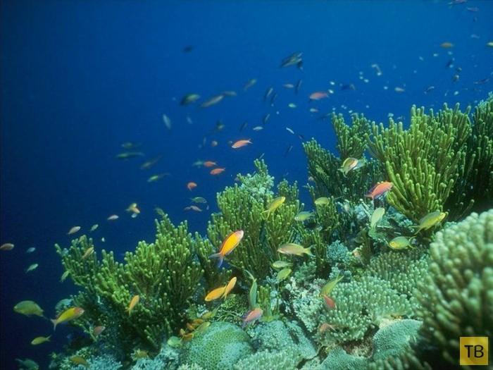 Жизнь рыб на глубине 7700 м —  видео