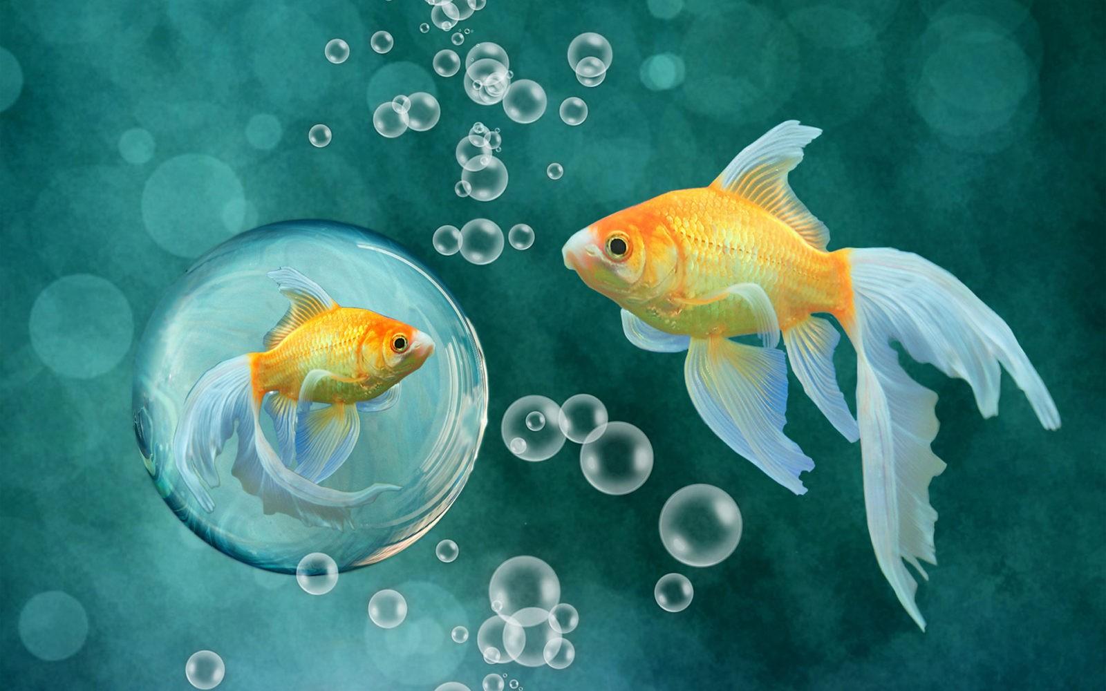 Рыбы могут обмениваться информацией