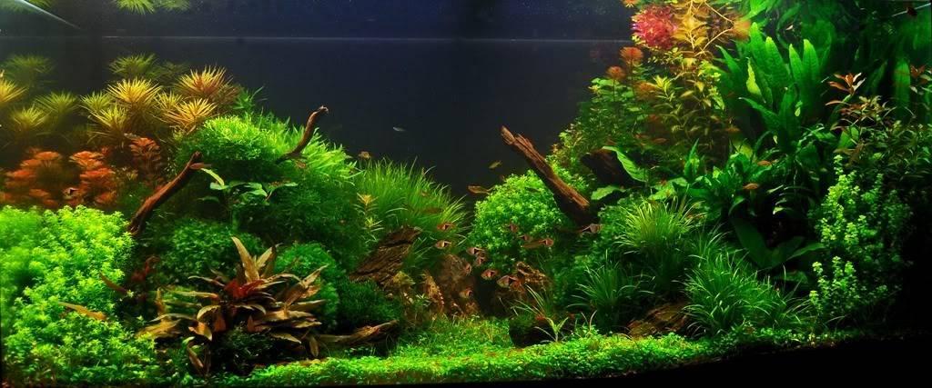 Аквариумные растения и их количество в аквариуме