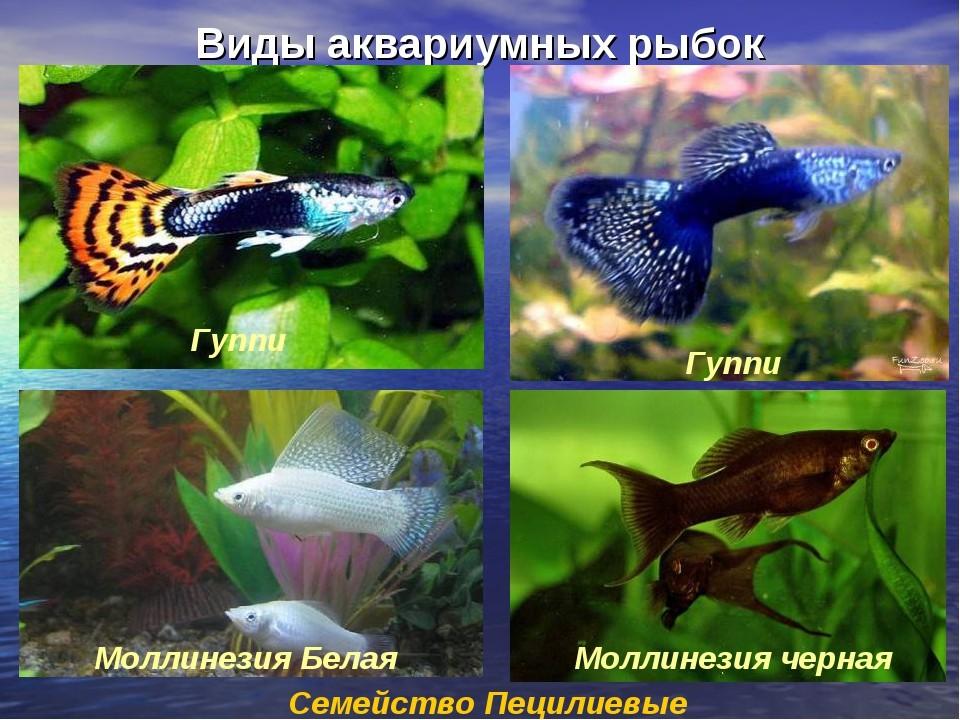 Все названия аквариумных рыбок с картинками должен