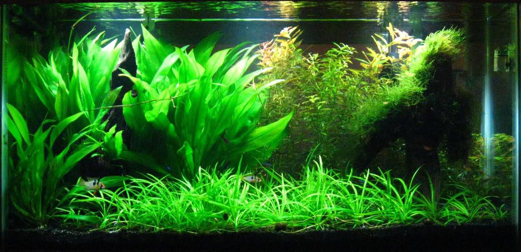 Мелкие советы и заметки для начинающих аквариумистов