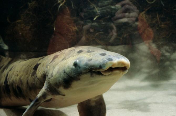Умерла самая старая в мире аквариумная рыба в возрасте 90 лет