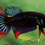 Полезные таблицы для аквариумистов