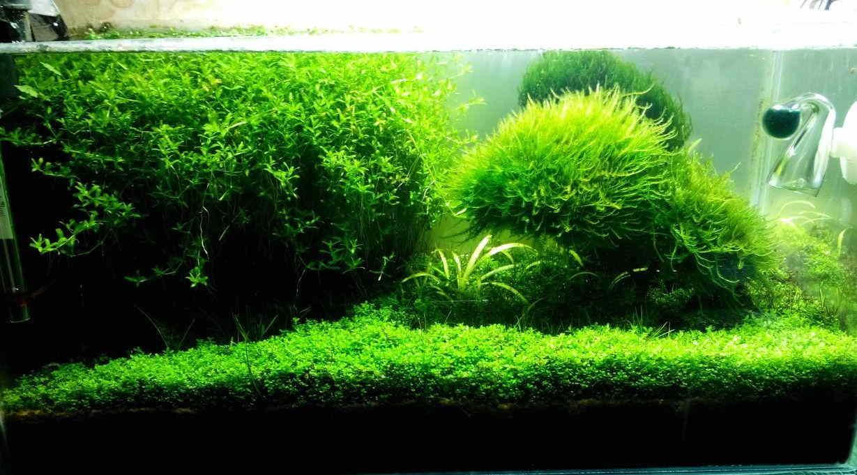 Почему гибнут аквариумные растения?