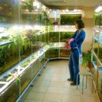 10 советов для разведения аквариумных рыбок