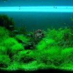Напутствие начинающим аквариумистам или о чем стоит подумать прежде,чем завести аквариум.