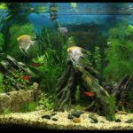 Химическая лаборатория в аквариуме