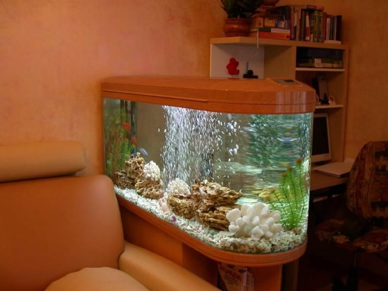 Как правильно нужно запустить аквариум в первый раз?
