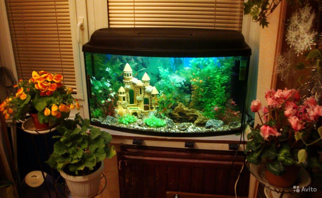 Как красиво оформить аквариум на 100 литров своими руками 66