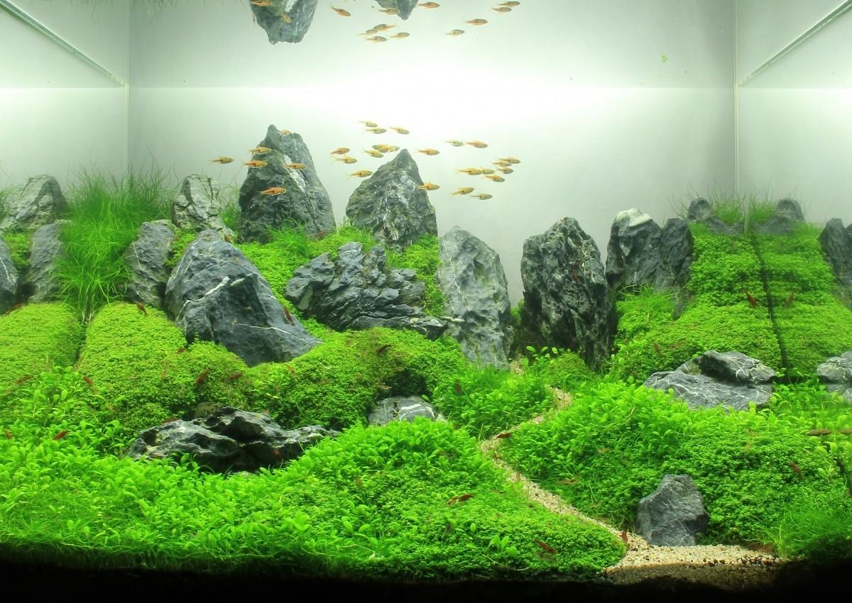 Аквариум на 100 литров — сколько рыбок можно заселить?