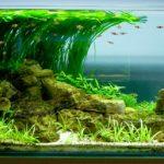 Помощники аквариума и его враги