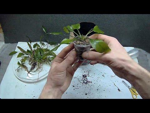 Посадка аквариумных растений