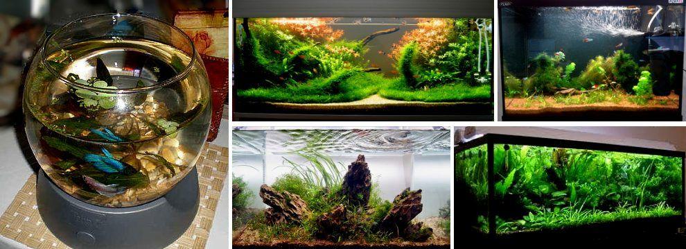 Как запустить аквариум с нуля.