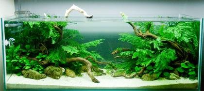 Как подготовить аквариум для рыбок