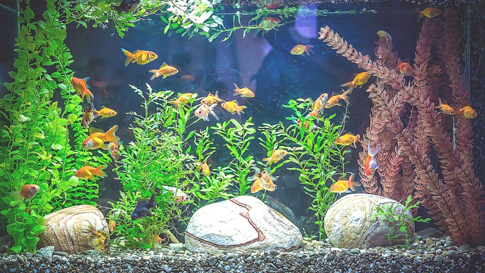 Особенности содержания  обитателей аквариума