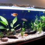 Как правильно установить и запустить аквариум?