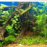 Значение аквариумных растений для аквариума