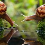 Улитки блюстители чистоты аквариума