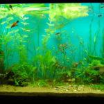 Подмена воды в аквариуме: фото,описание,видео