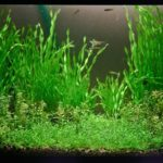 Размножение аквариумных растений
