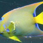 Болезни, поражающие тропических аквариумных рыбок