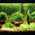 Аквариумные растения для начинаюших