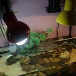 Как подогреть аквариум лампами?