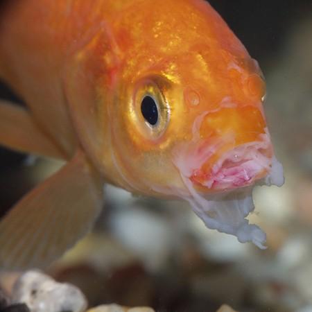 почему не клюет рыба в рыбном месте