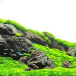 Фотогалерея; оформления и дизайн аквариумов