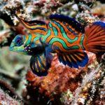Морские аквариумные рыбки — несколько практических советов.