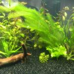 Какую роль и значение играют аквариумные растения в аквариуме.