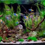 Пресноводный аквариум: среди рек, ручьев и озер