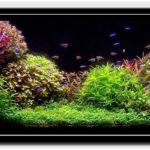 Разнообразие аквариумных растений