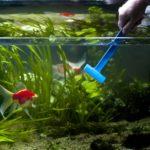 Как поддерживать чистоту в аквариуме?