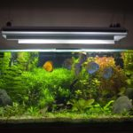 Как влияет аквариум на микроклимат в квартире?