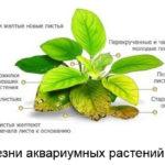 Микроэлементы для аквариумных растений
