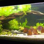 Соответствие параметров воды в аквариуме.