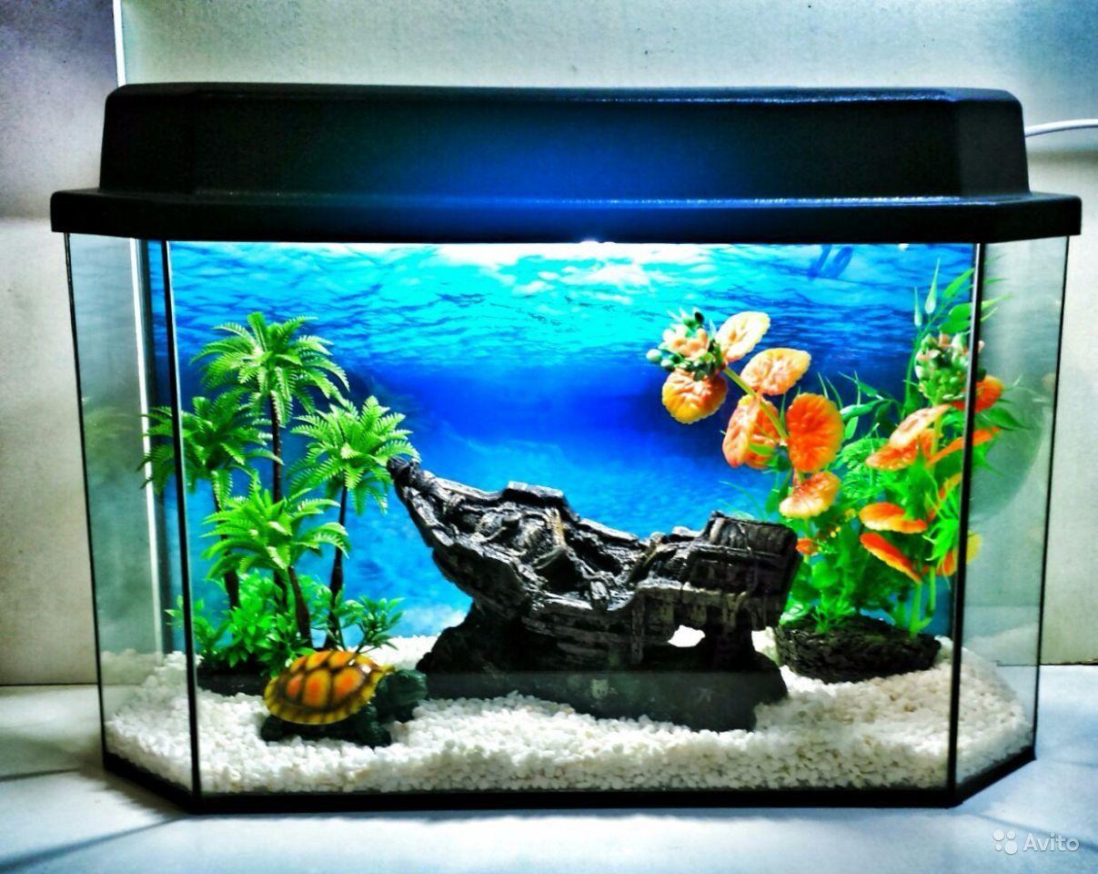 Картинки по запросу Что нужно знать перед покупкой аквариума?