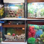 Что нужно знать перед покупкой аквариума.
