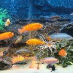 Поведение аквариумных рыбок вызваны теми или иными причинами.