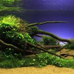 Cоветы для декора аквариума