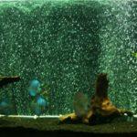 Частичная подмена воды в аквариуме.