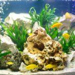 Какая температура нужна аквариумным рыбкам и растениям.