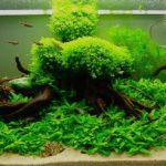 Некоторые популярные аквариумные растения.