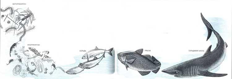 Как питаются рыбы в природе?